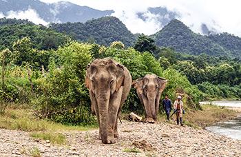 Mandalao éléphants